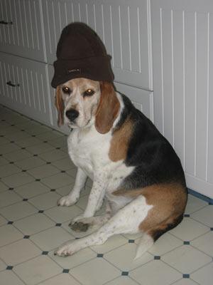 grunge_beagle