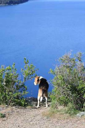 lake_dog